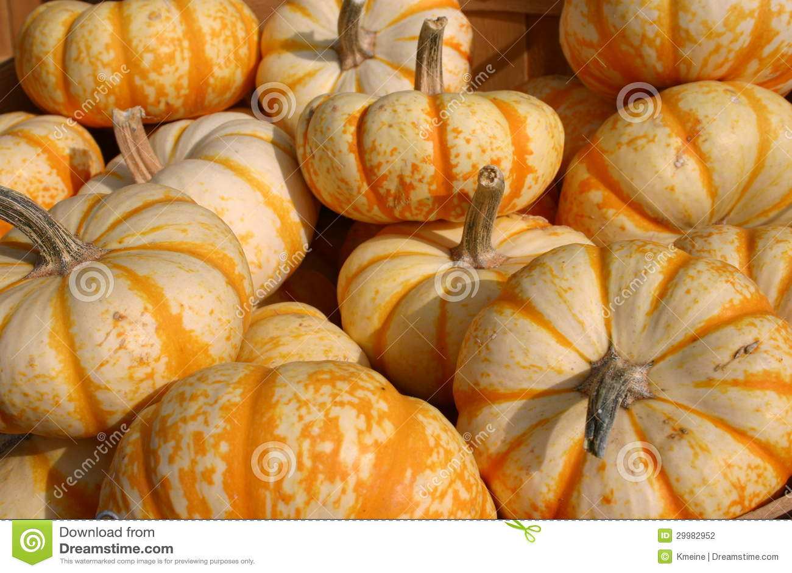 Fall Pumpkin Background Wallpaper Little Orange And White Pumpkins Stock Photo Image 29982952