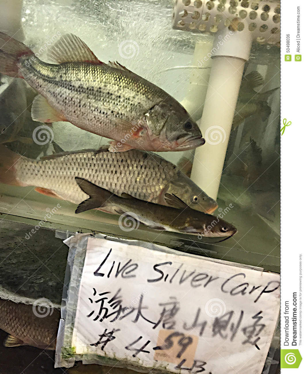 Asian Stock Markets Live Update Live Fish For Sale Stock Photo Image Of Characters Words