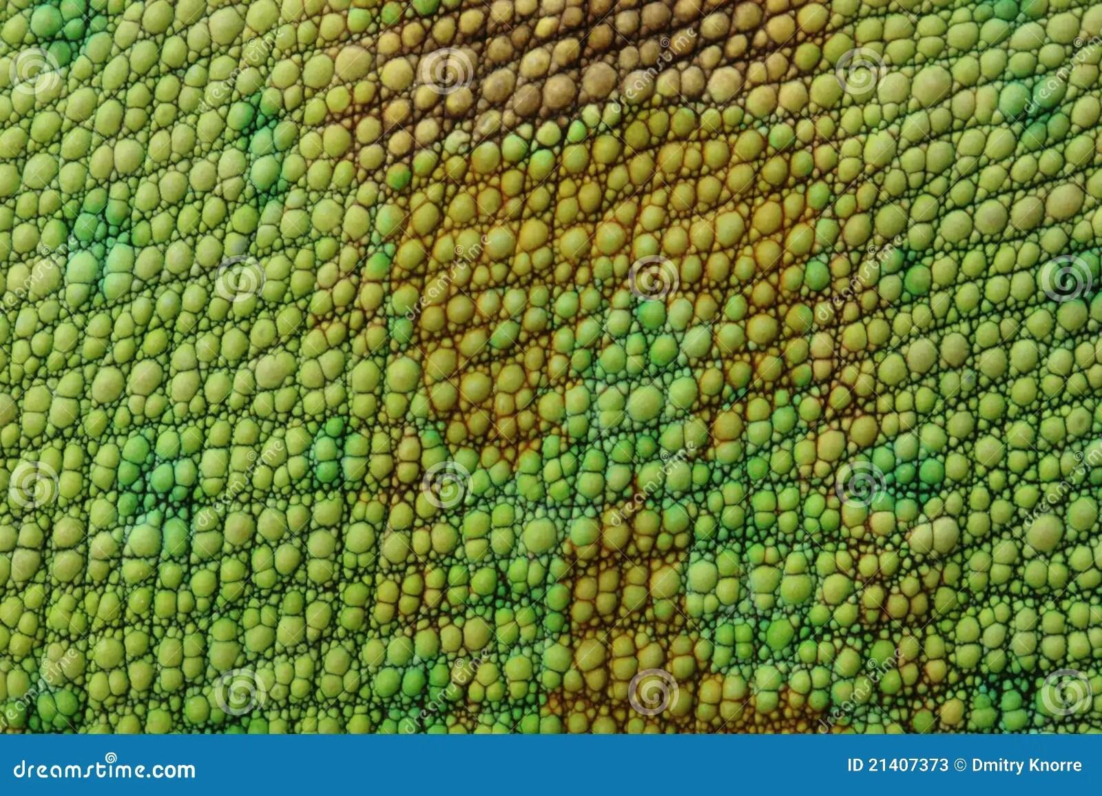Green Animal Print Wallpaper Lizard Skin Stock Image Image Of Texture Dragon Nature