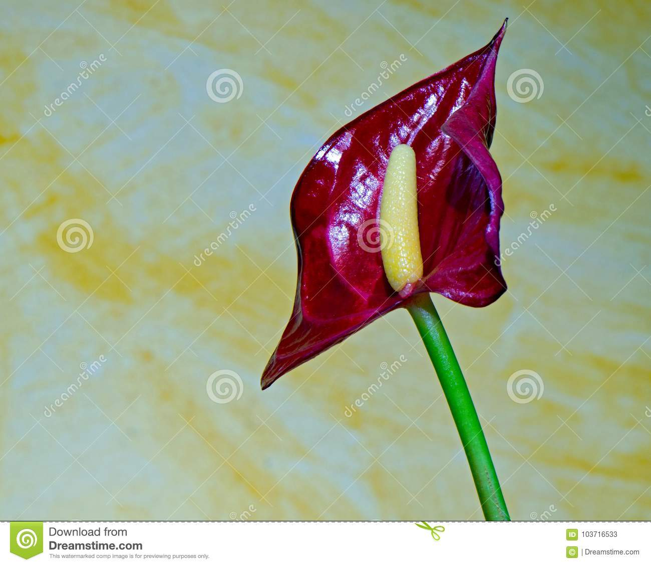 Small House Plants With Flowers Macro Pictures From The Flowers Of Houseplants Stock Image Image