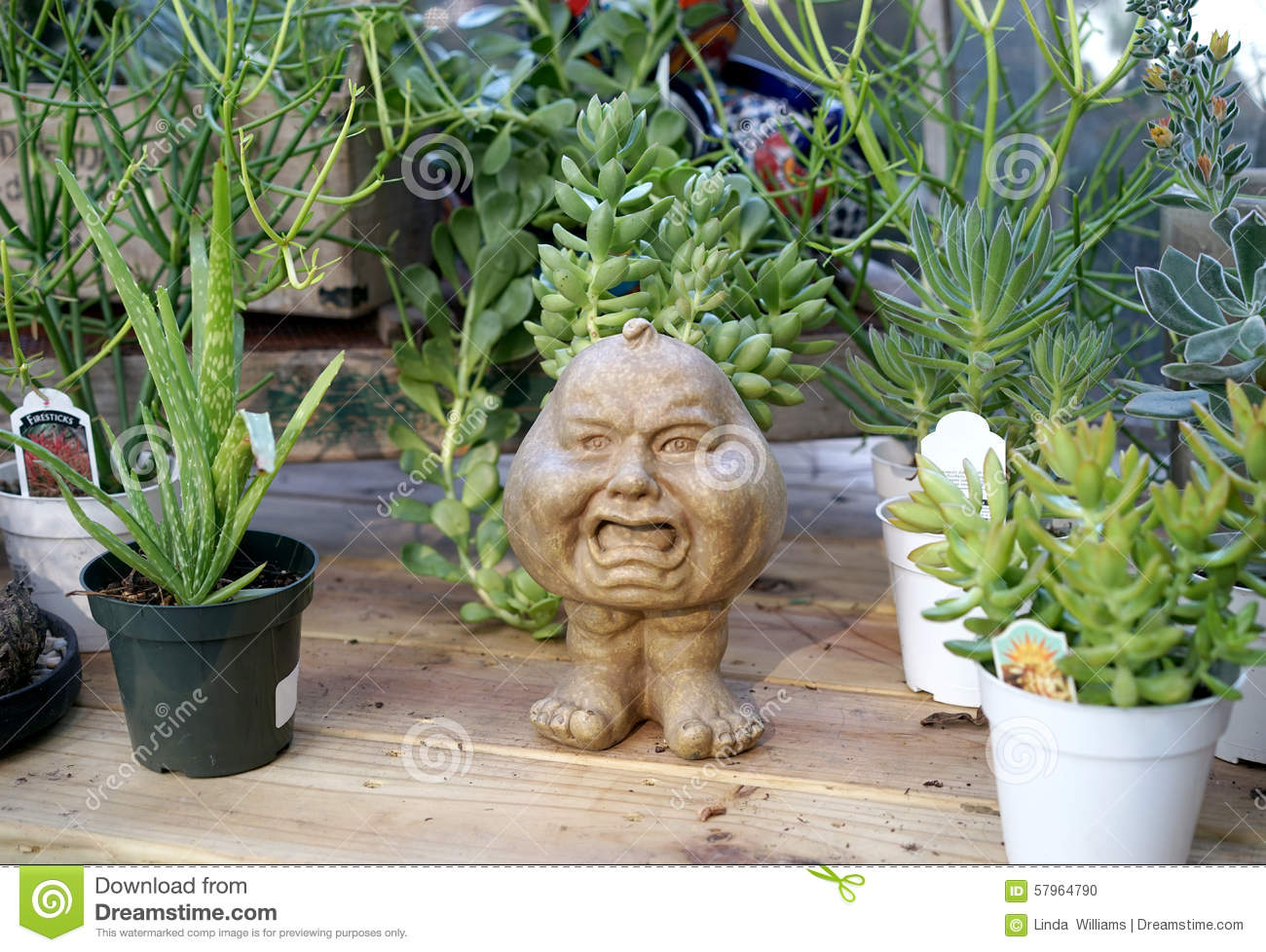 Planter Heads Mad Pumpkin Head Planter Stock Photo Image 57964790