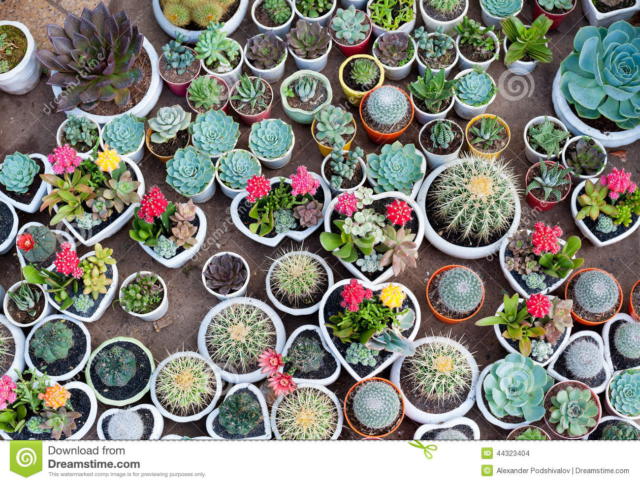 Cactus Pots For Sale Many Cacti In Pots Stock Photo Image Of Succulent Flower