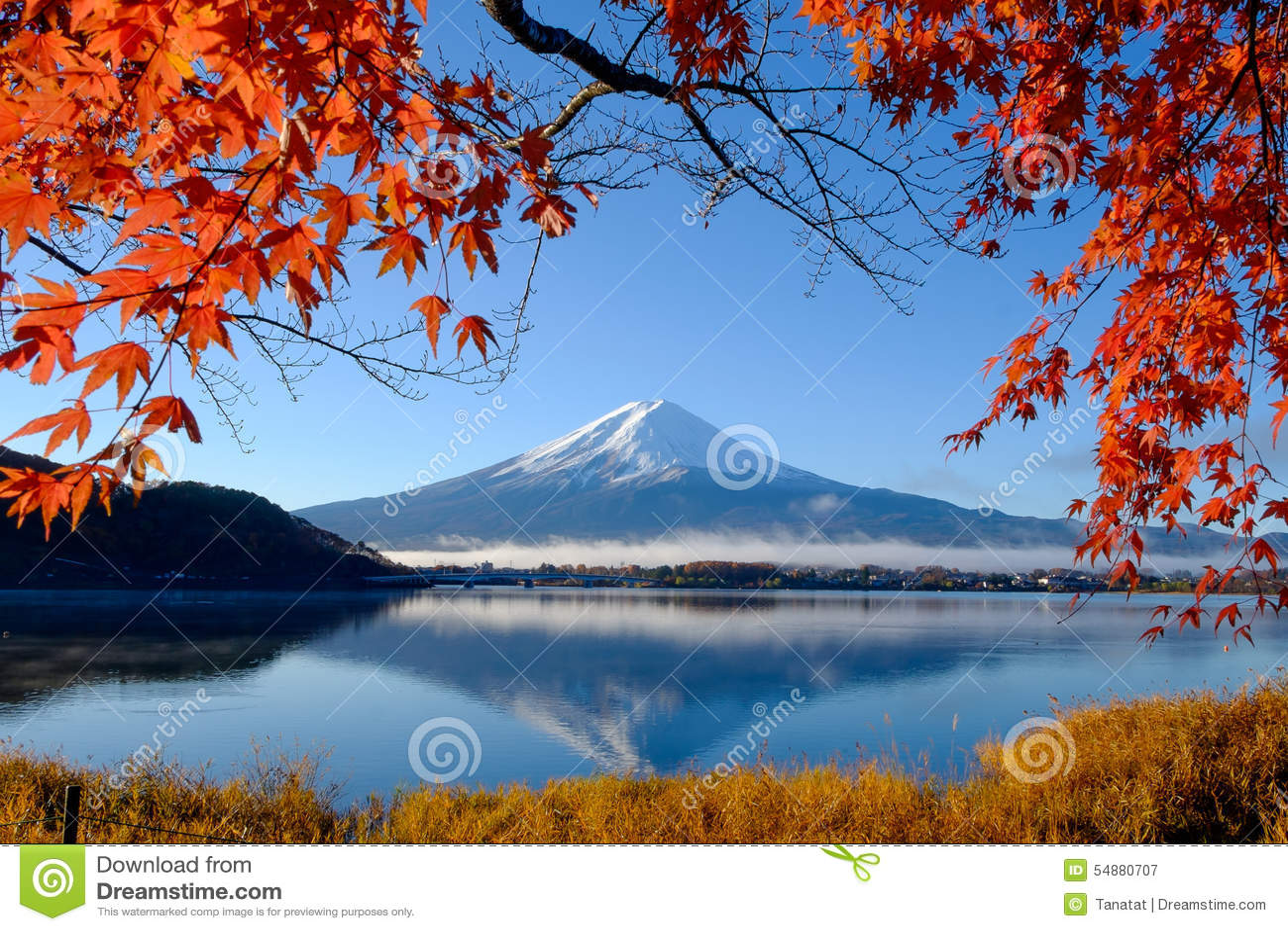 Mount Fuji Wallpaper Iphone Mt Fuji And Autumn Foliage At Lake Kawaguchi Stock Image