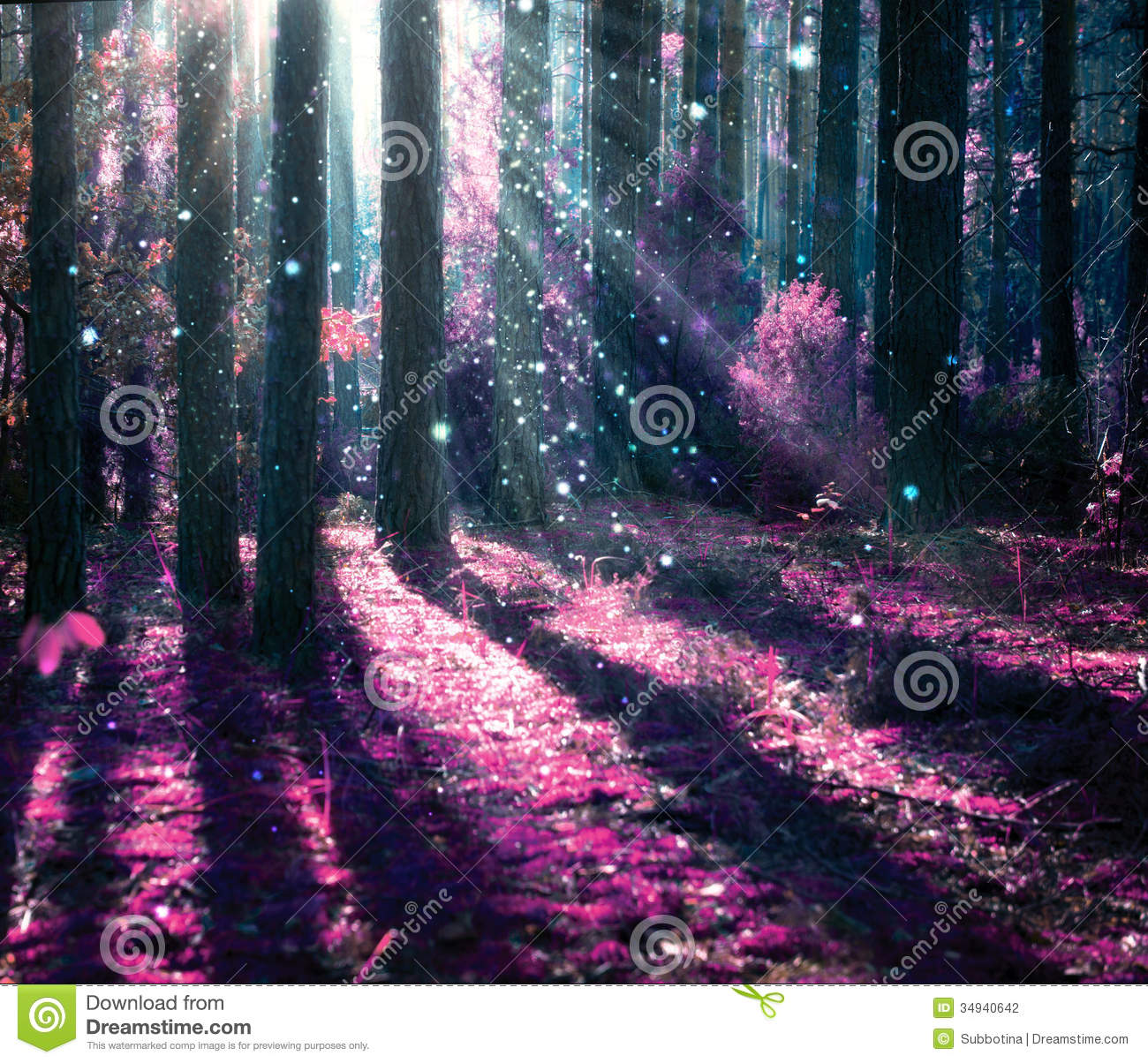 Purple Fall Wallpaper Mysterious Old Forest Stock Photography Image 34940642