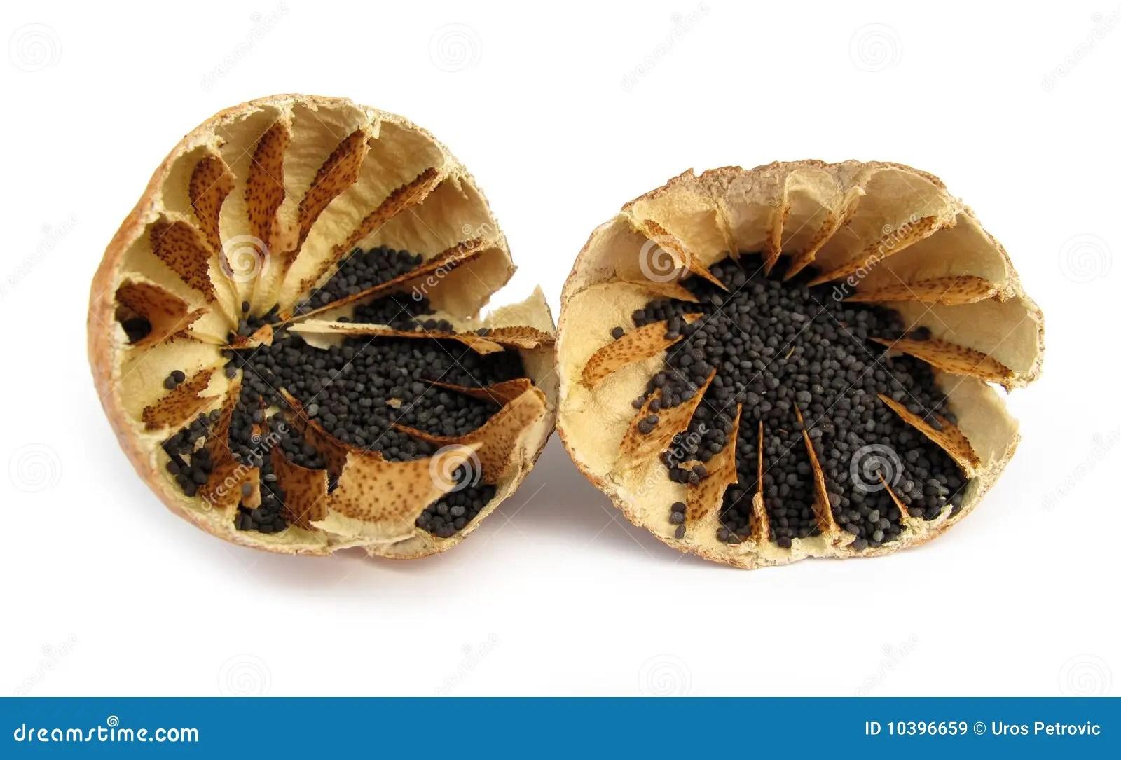 3d Design Flower Wallpaper Opium Poppy Royalty Free Stock Images Image 10396659