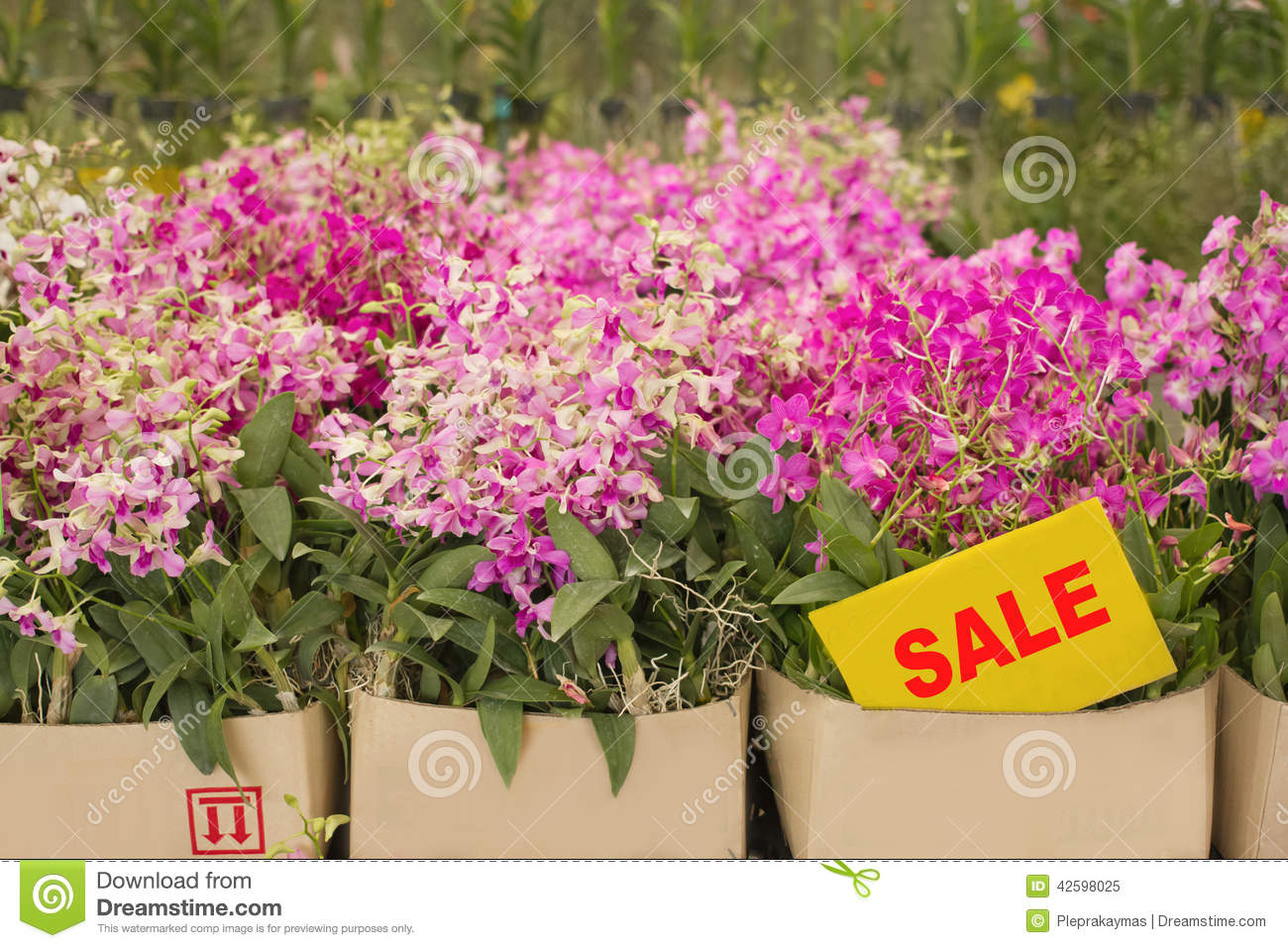 Plant Pot Sale Orchid Flower Pots On Sale In Orchid Farm Stock Photo