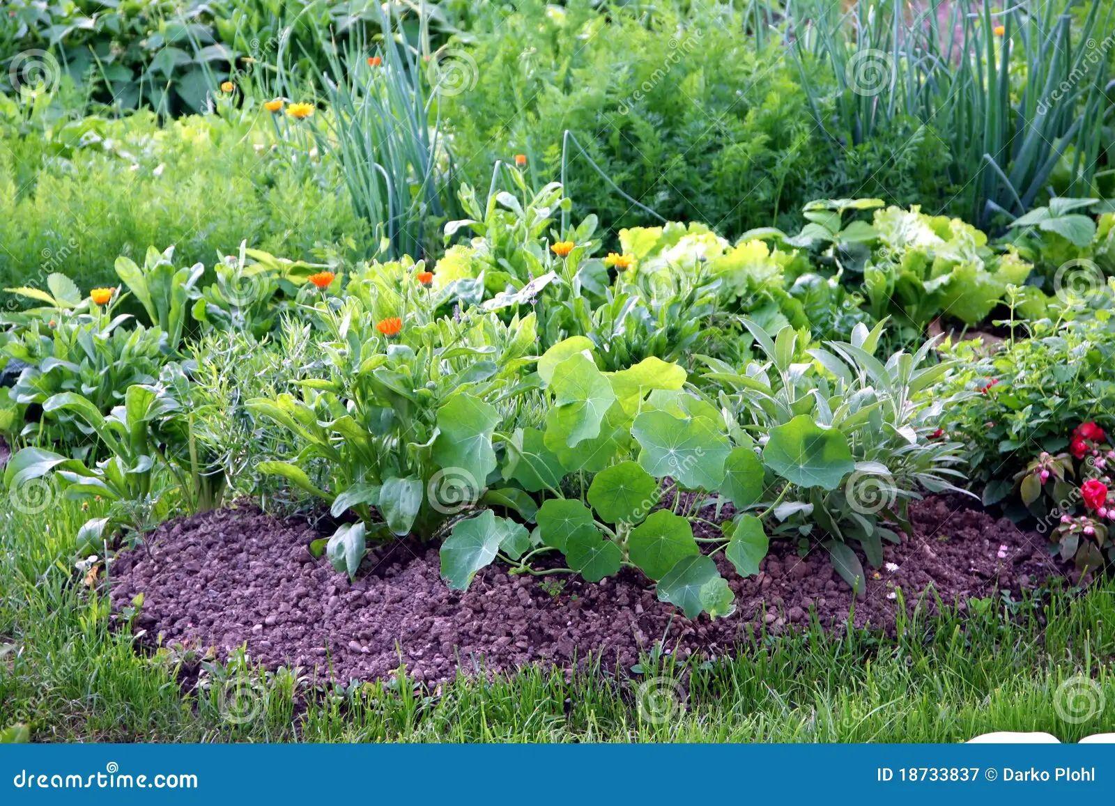 Bed garden mix organic plants vegetable