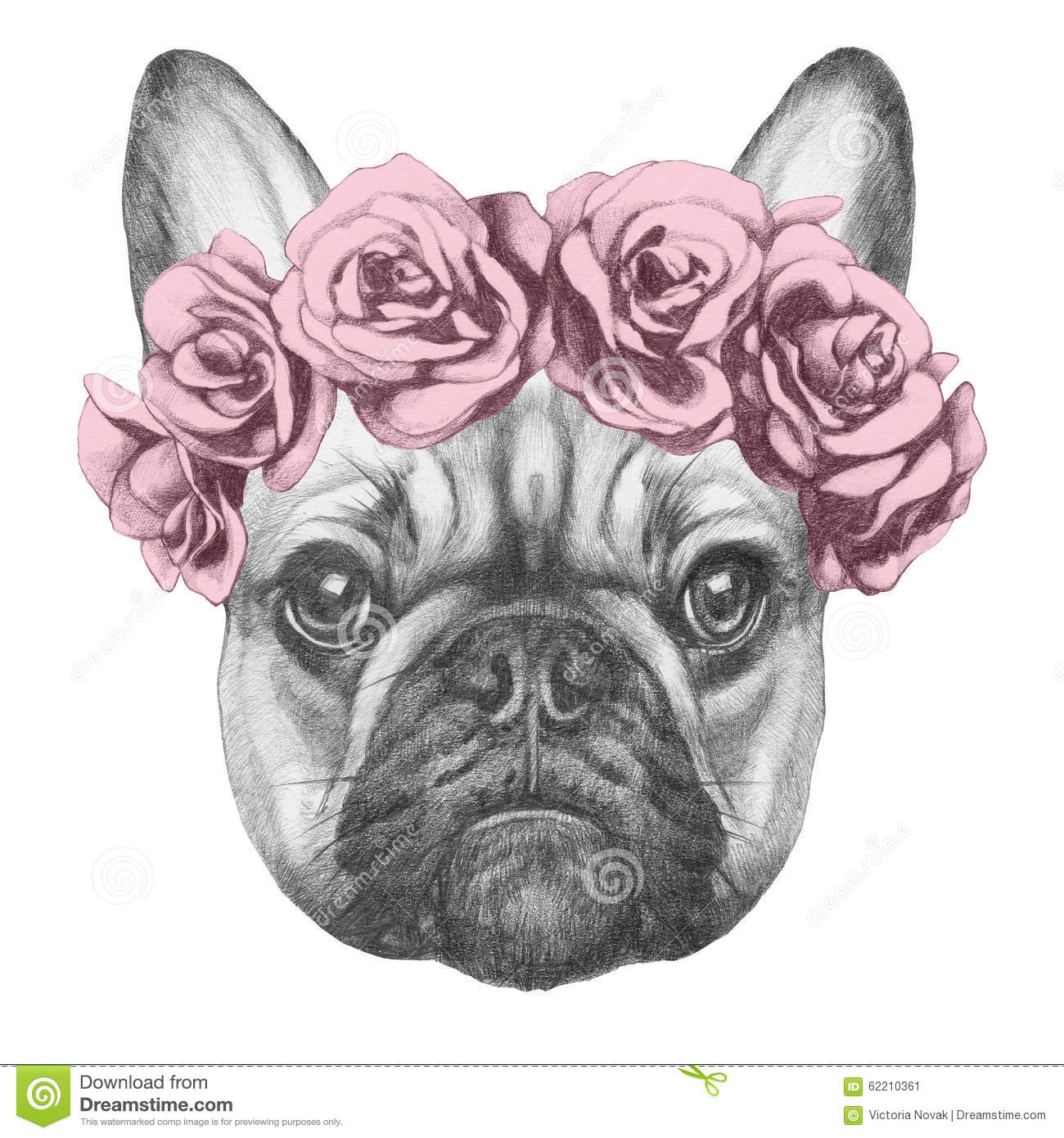 Bouledogue Decoration Design Original Drawing Of French Bulldog With Roses. Stock