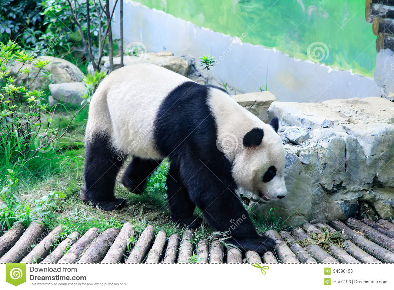 Black Animal Print Wallpaper Panda Walking Stock Photo Image Of Asian Chinese Asia