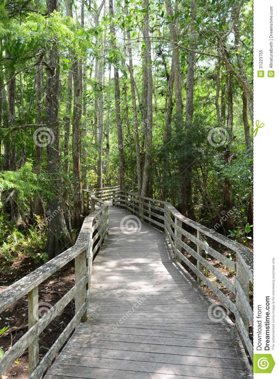 3d Free Fall Nature Wallpaper Path Through Forest With Beautiful Forest Scenery Royalty