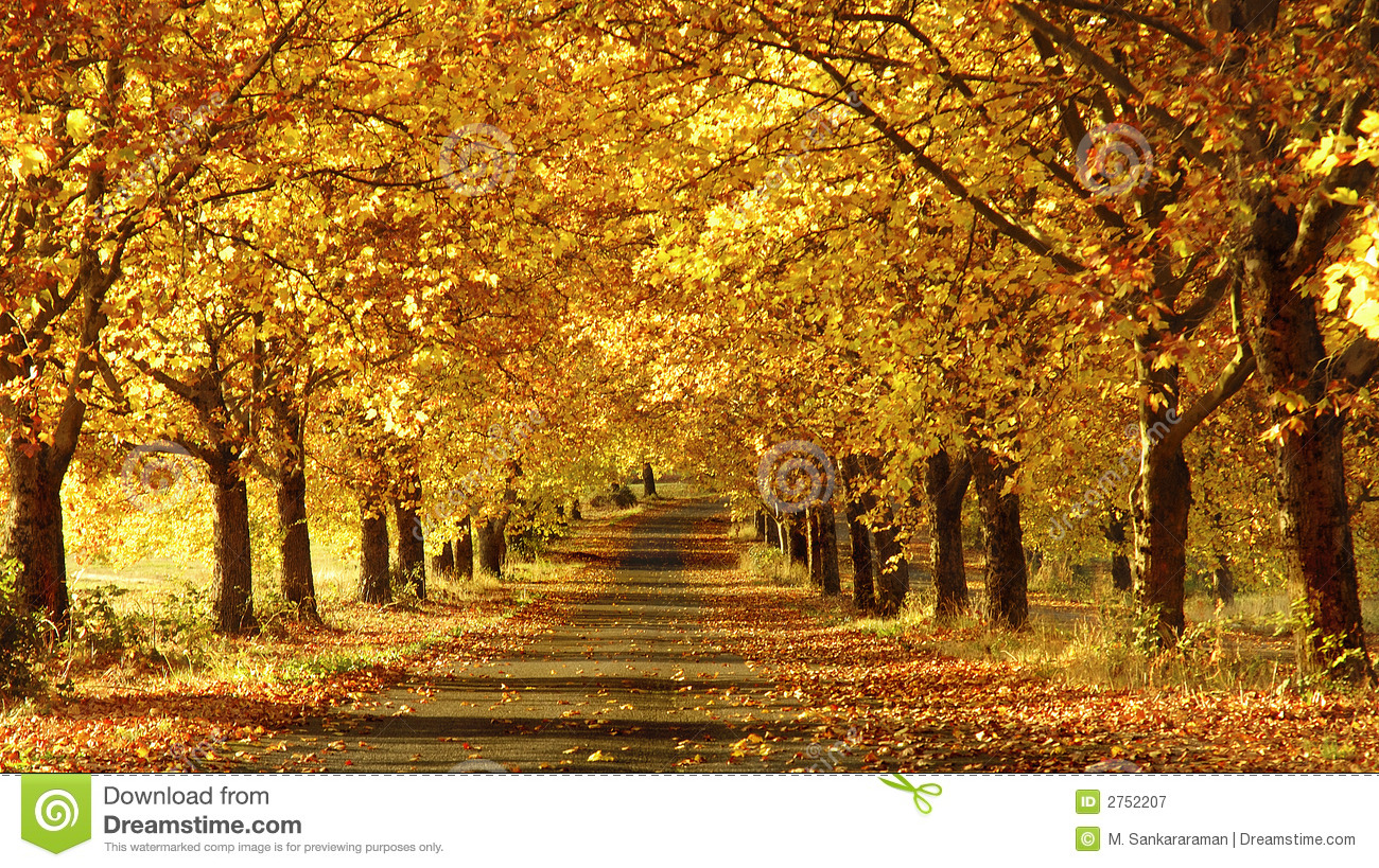 Fall Scenery Wallpapers Free Pathway In The Fall Stock Image Image Of Environment