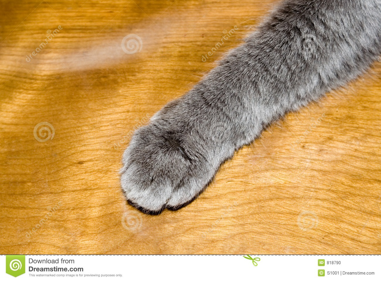 Pattes De Bureau Patte De Chats Photo Stock Image 818790