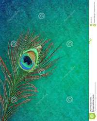 Peacock Feather Grungy Background Stock Illustration ...