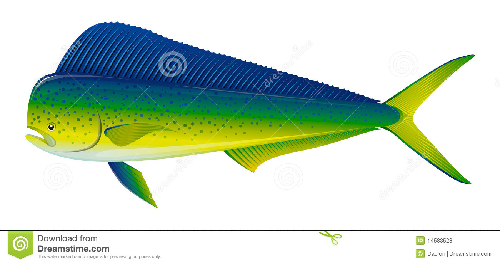 Mahi Name Wallpaper 3d Pescados De Dorado Fotos De Archivo Libres De Regal 237 As