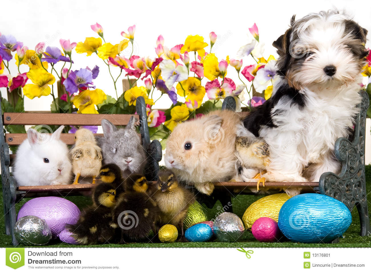 Fish Animation Wallpaper Free Download Pets With Easter Eggs On White Background Stock Image