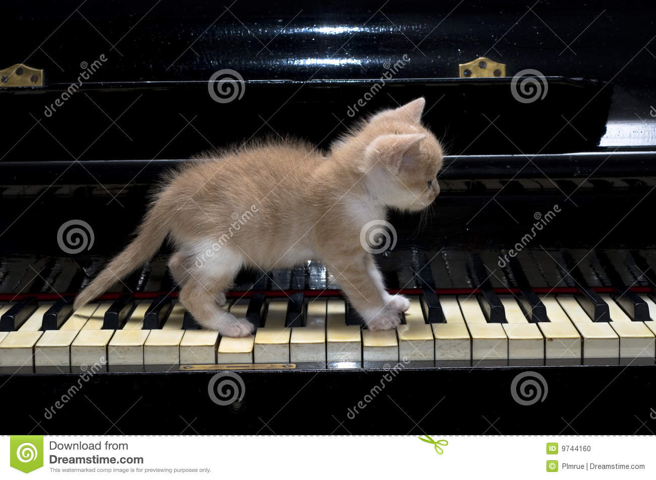 Animated Girl Wallpaper Free Download Piano Cat Stock Photo Image 9744160