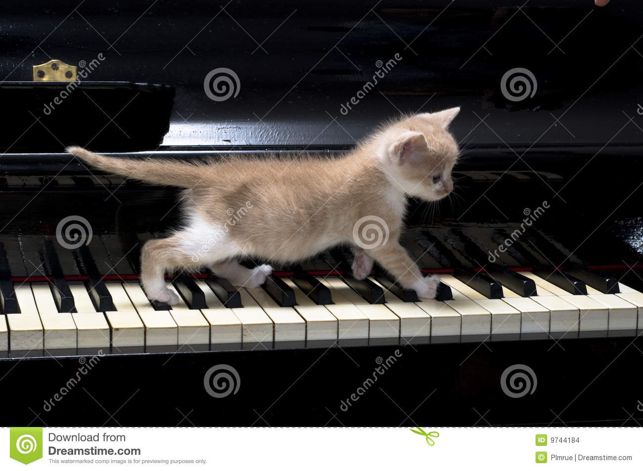 3d Abstract Rainbow Wallpaper Piano Cat Stock Images Image 9744184
