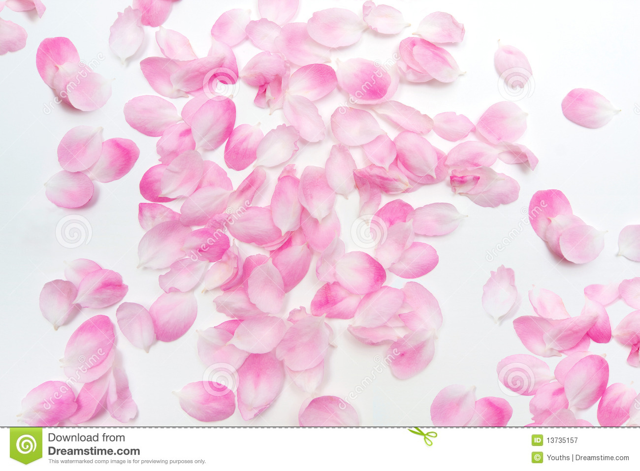 Free Falling In Love Wallpaper Pink Petals Royalty Free Stock Photography Image 13735157