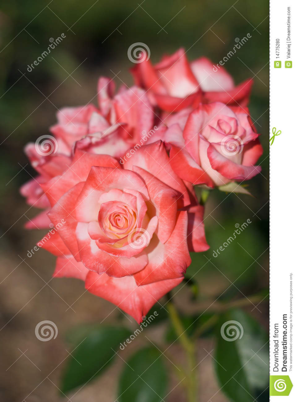 Durgesh 3d Name Wallpaper The Gallery For Gt Pink Rose Tattoo