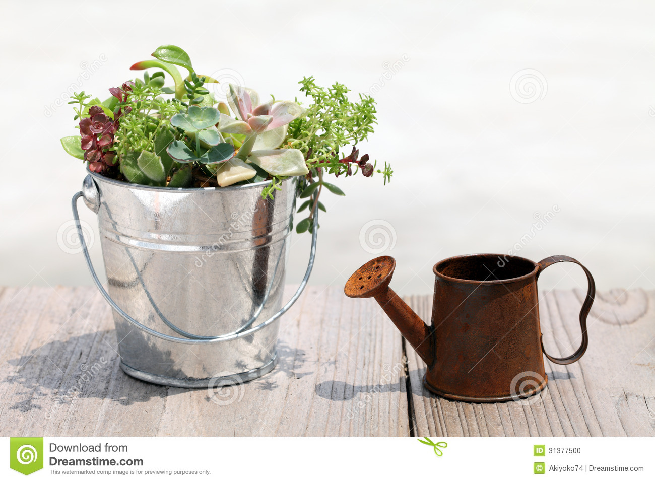 Plant Watering Cans Plant With A Watering Can Stock Photo Image 31377500