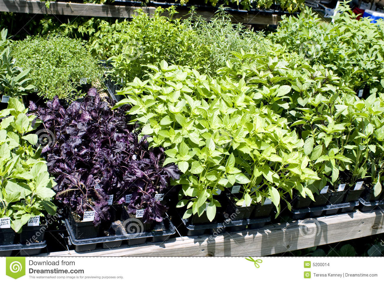 Plant Pot Sale Plant Containers With Herbs Royalty Free Stock Image