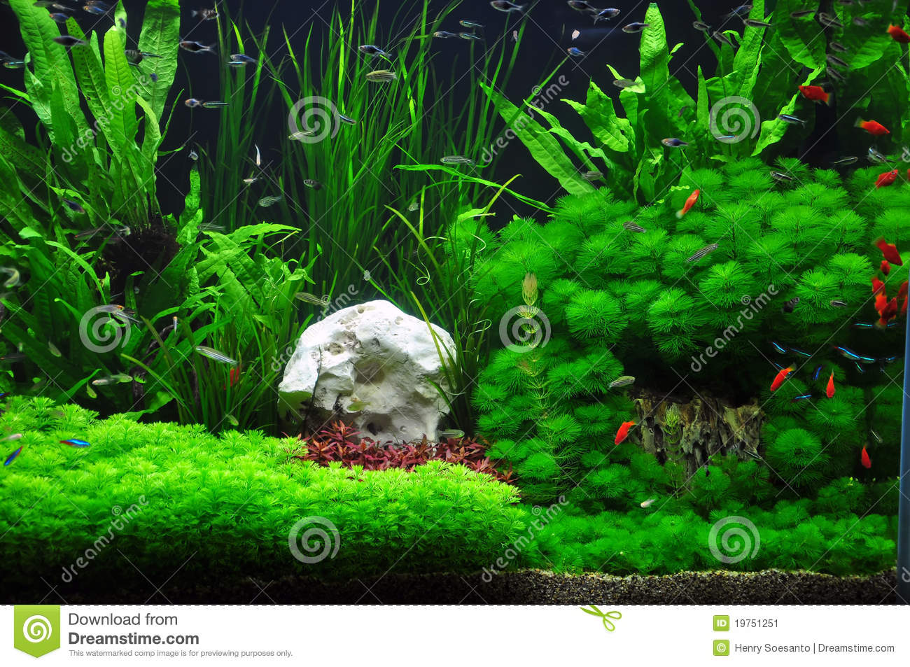 Wallpaper Batu Alam 3d Platies Tetras And Mollies In Aquascaping Stock Image