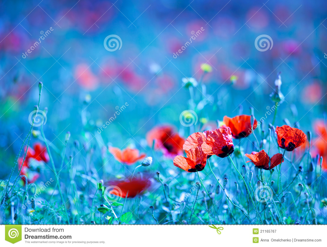 Royalty free stock photo background blue dreamy field flower focus natural nature night poppy