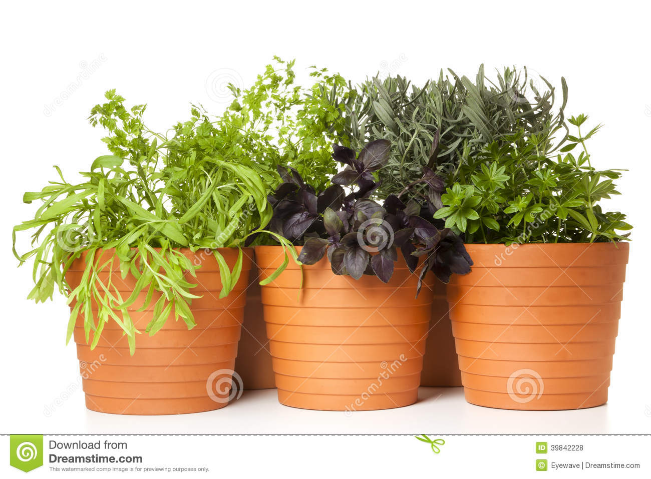 Herb Pots Kitchen Potted Kitchen Herbs Stock Photo Image 39842228