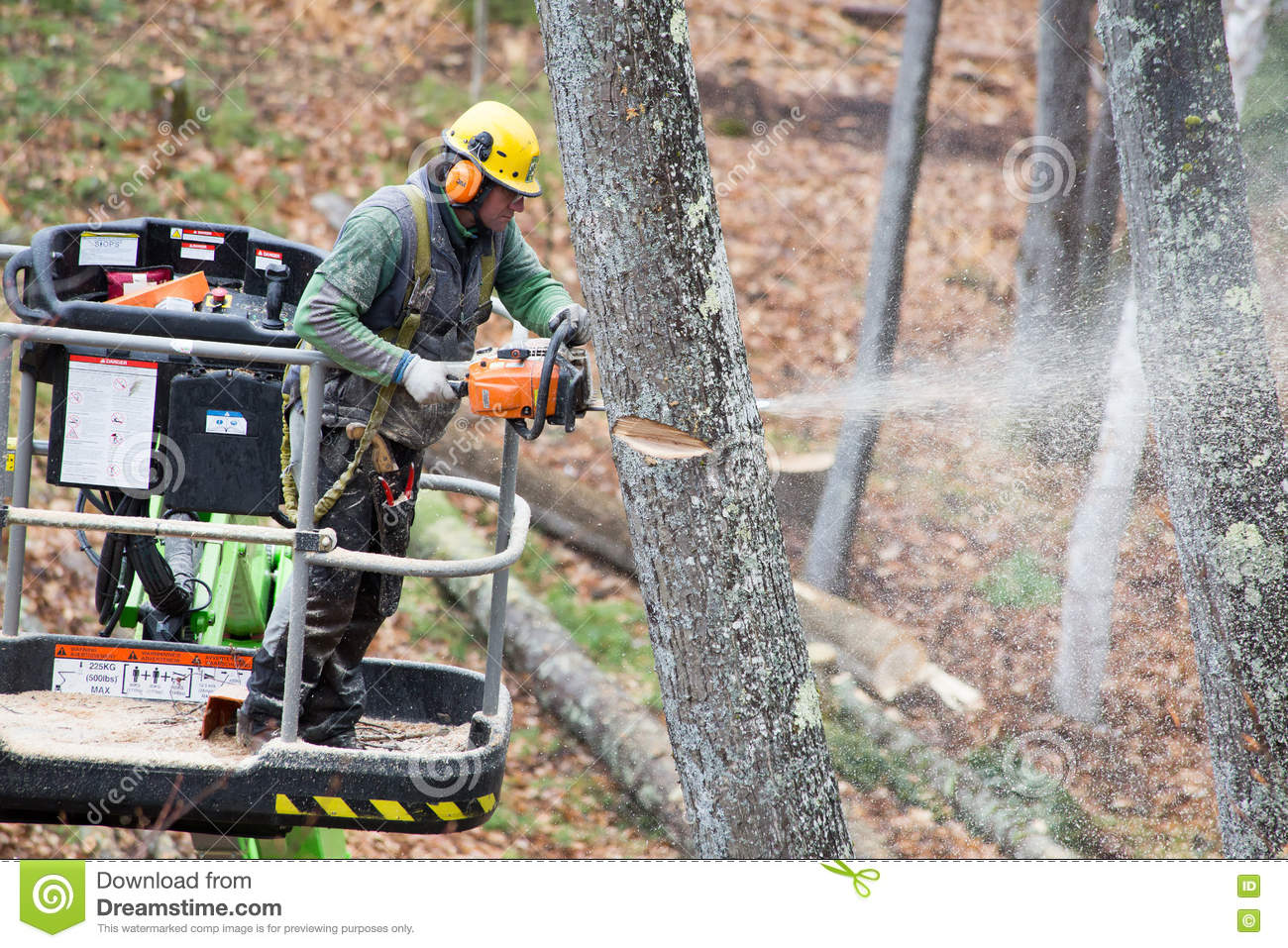Tree Cutter Professional Tree Cutter Editorial Photography Image Of Labor