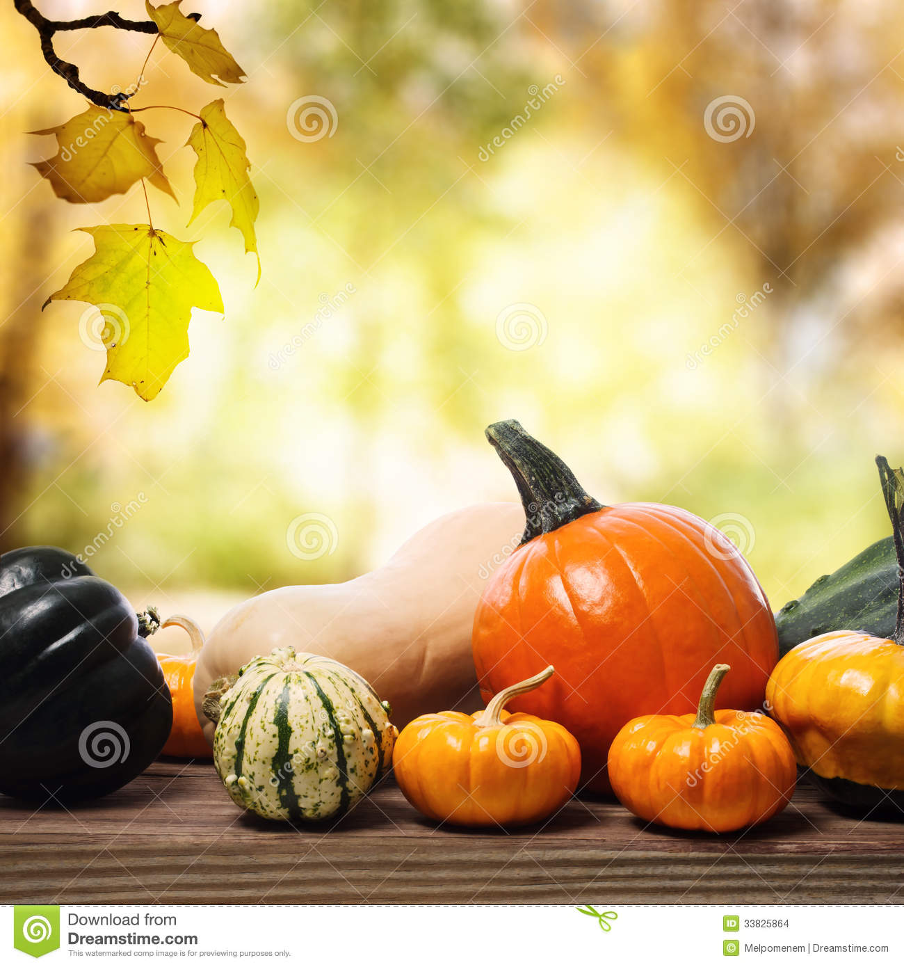 Fall Harvest Wallpaper Hd Pumpkins And Squashes With A Shinning Fall Background