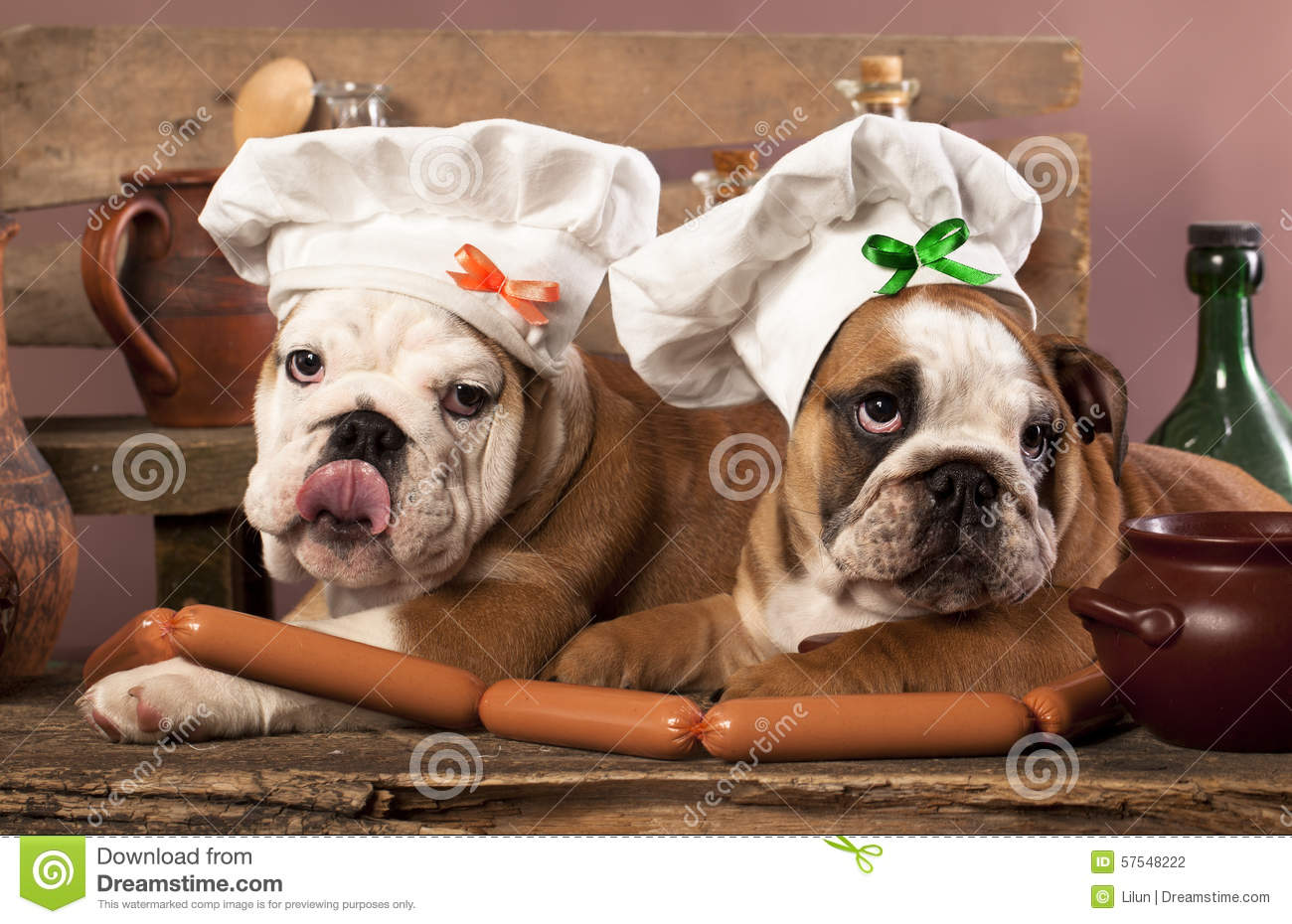 Big W Dog Food Puppies In Chef 39s Hat And Sausages Stock Photo Image Of