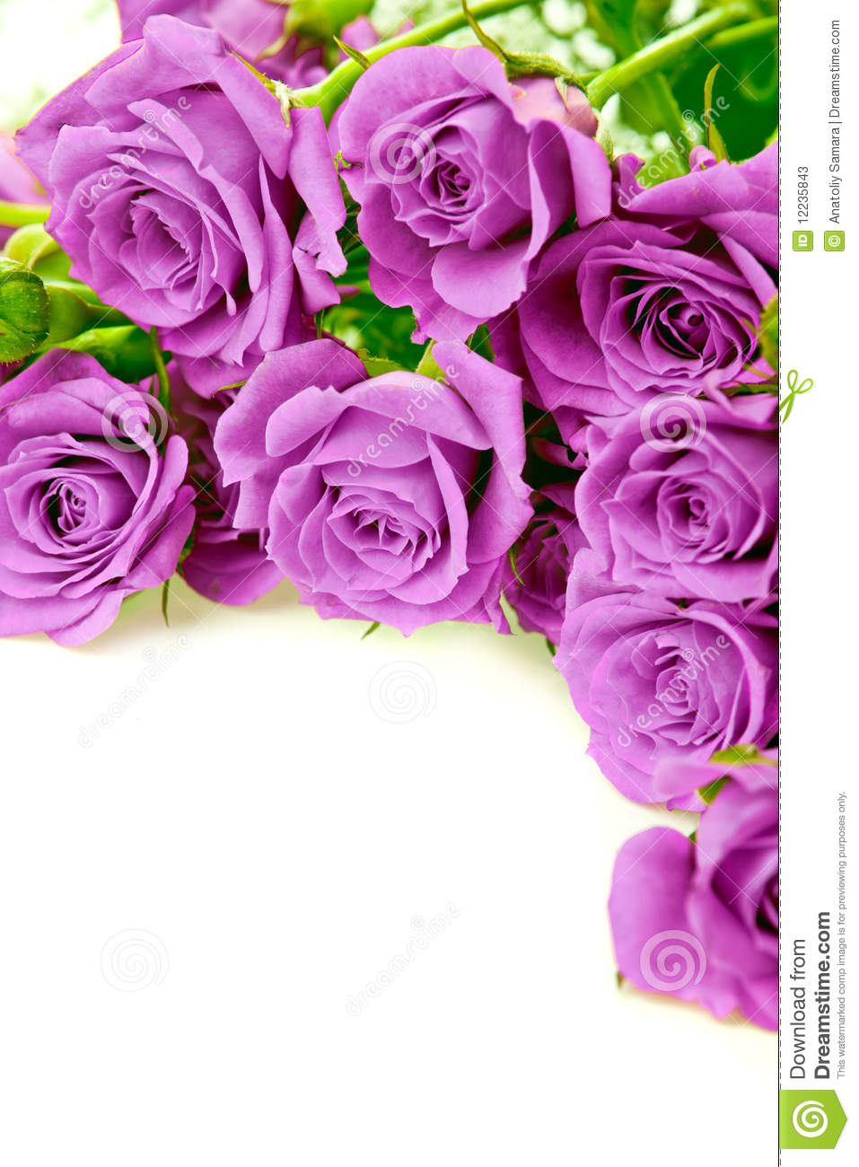 3d Geometric Shapes Wallpaper White Purple Roses Stock Image Image Of Background Blossom