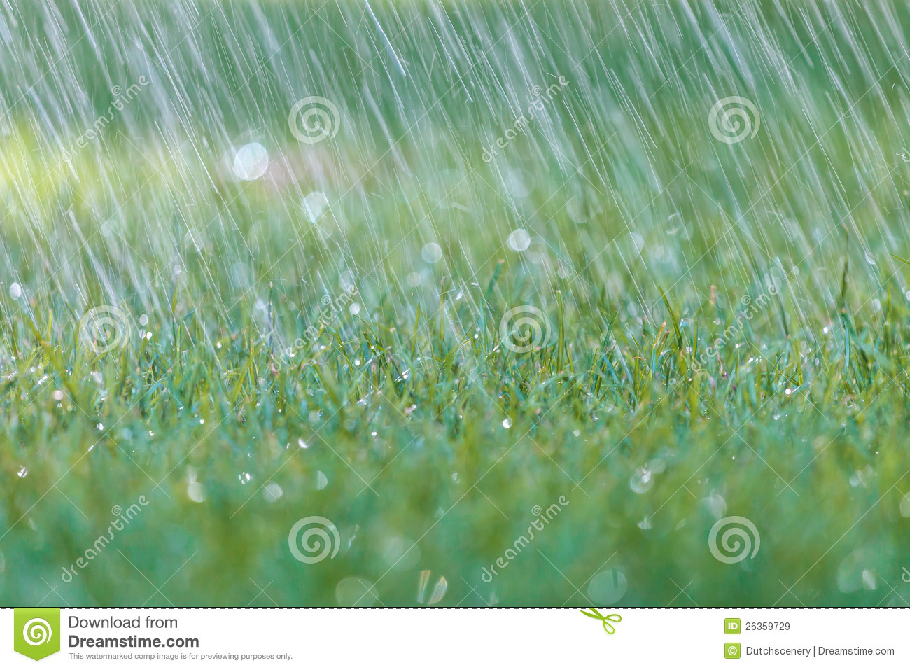 Wallpaper Falling Down Rain Is Falling On Fresh Green Grass Royalty Free Stock
