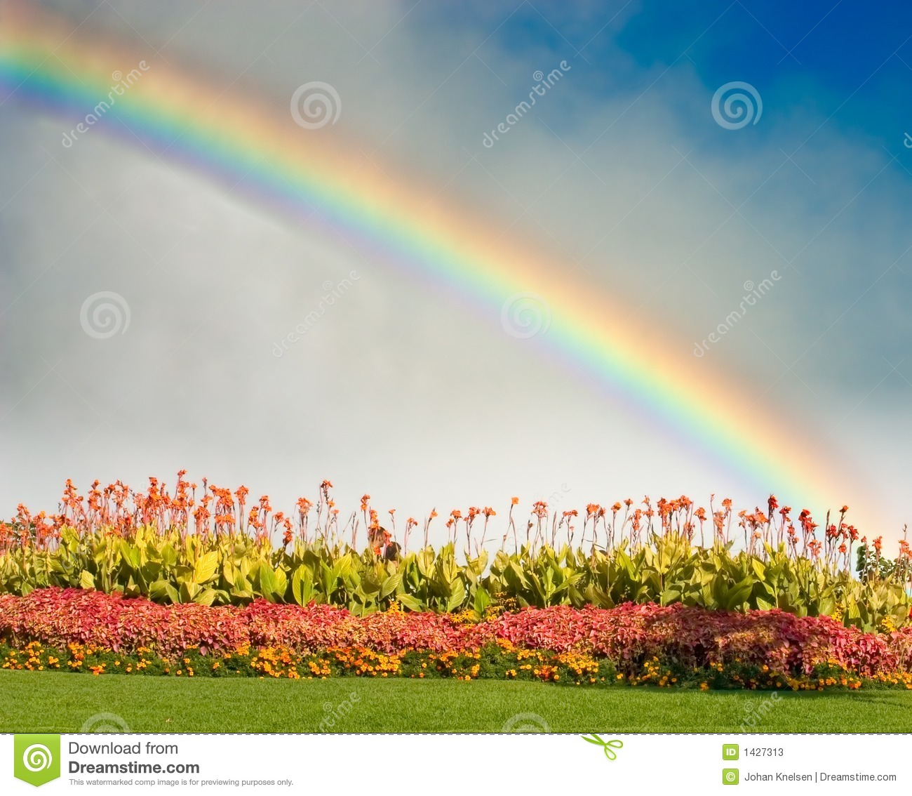 3d Sunflower Wallpaper Rainbow And Flowers Stock Photos Image 1427313