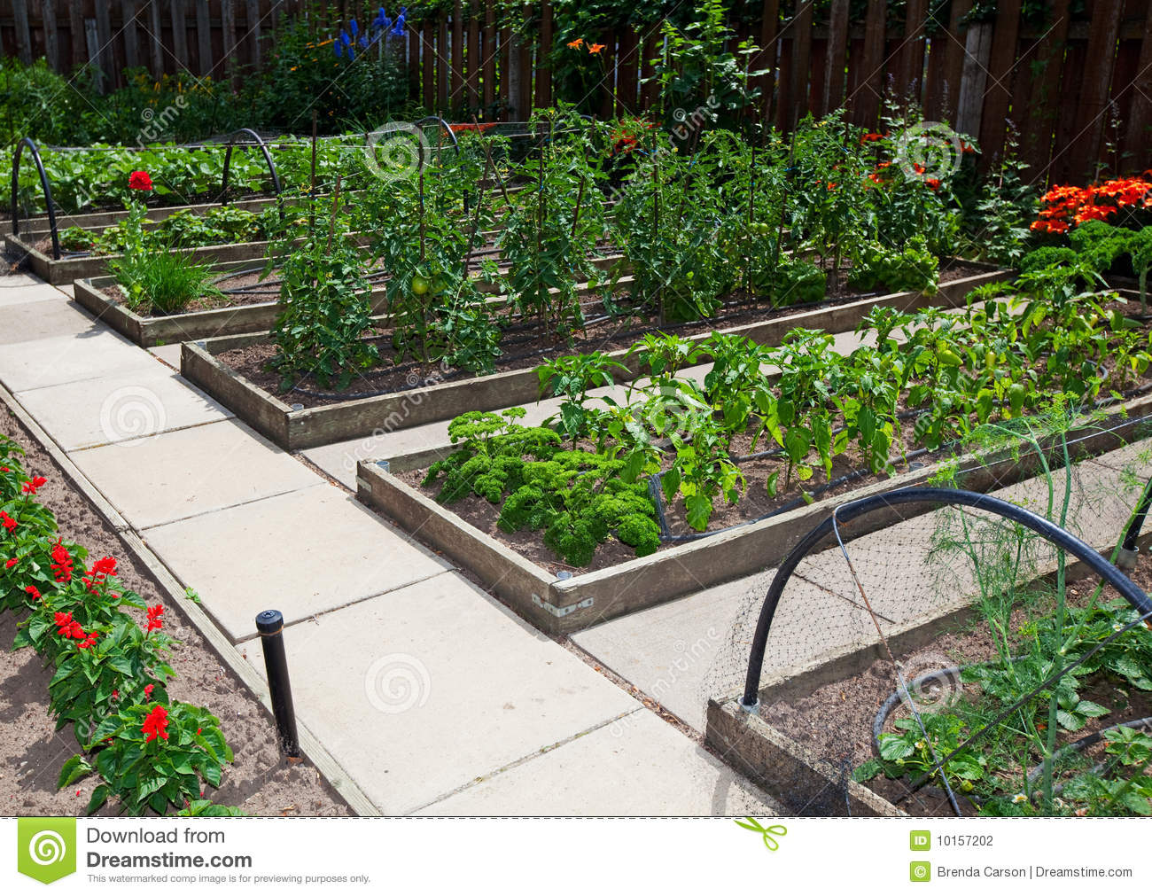 Raised vegetable gardens - Raised Vegetable Garden Raised Vegetable Garden Beds Stock Photography