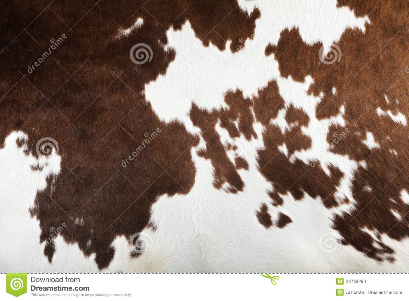 Animal Farm Wallpaper Real Cow Skin Texture Stock Photo Image Of Background