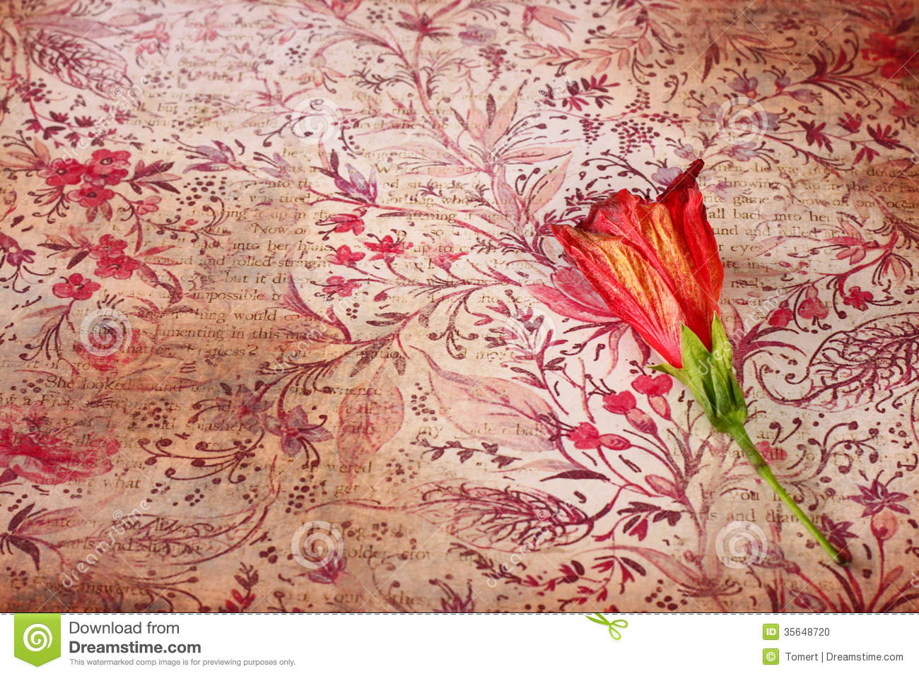 Computer 3d Wallpaper Download Red Flower On Vintage Grunge Background Stock Photo