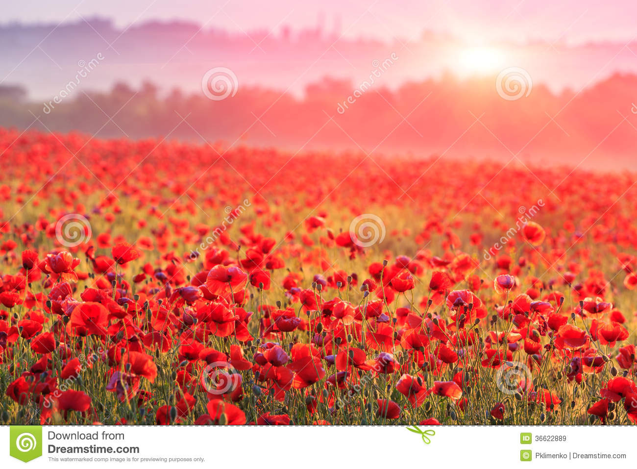 Spring 3d Live Wallpaper Red Poppy Field Royalty Free Stock Images Image 36622889