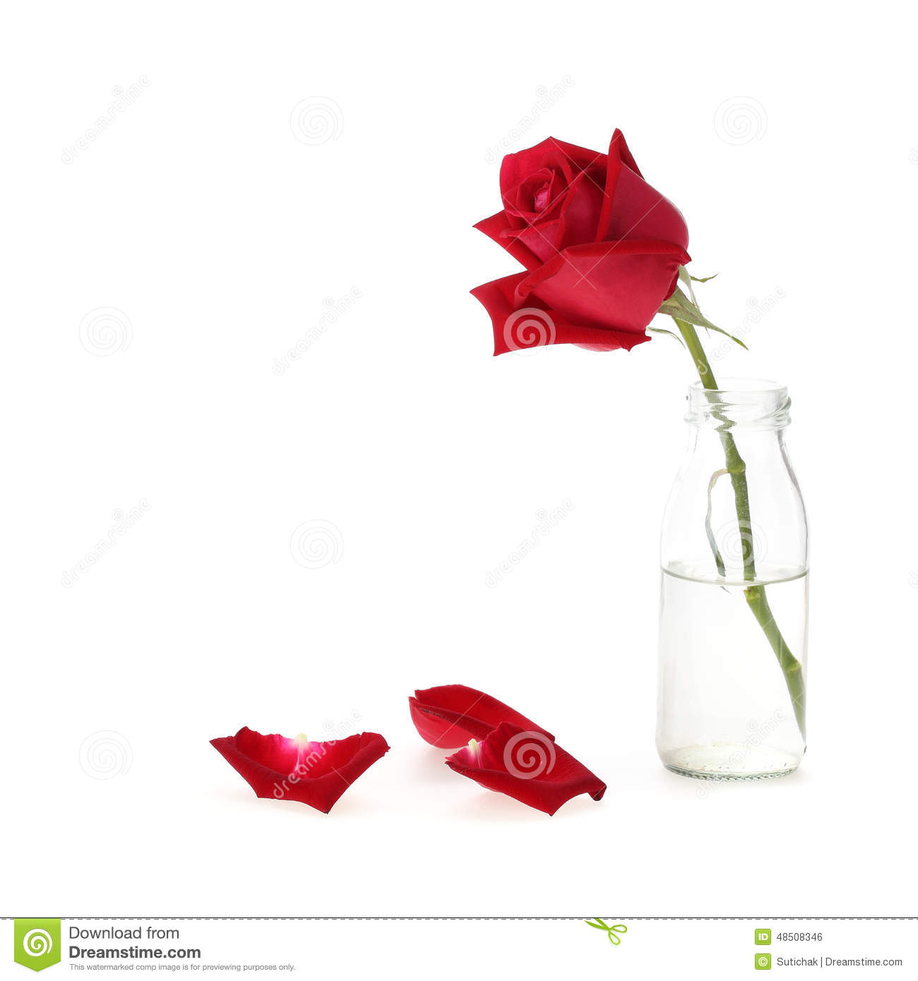 Rosen In Vase Red Rose Flower In Glass Vase Stock Photo Image 48508346