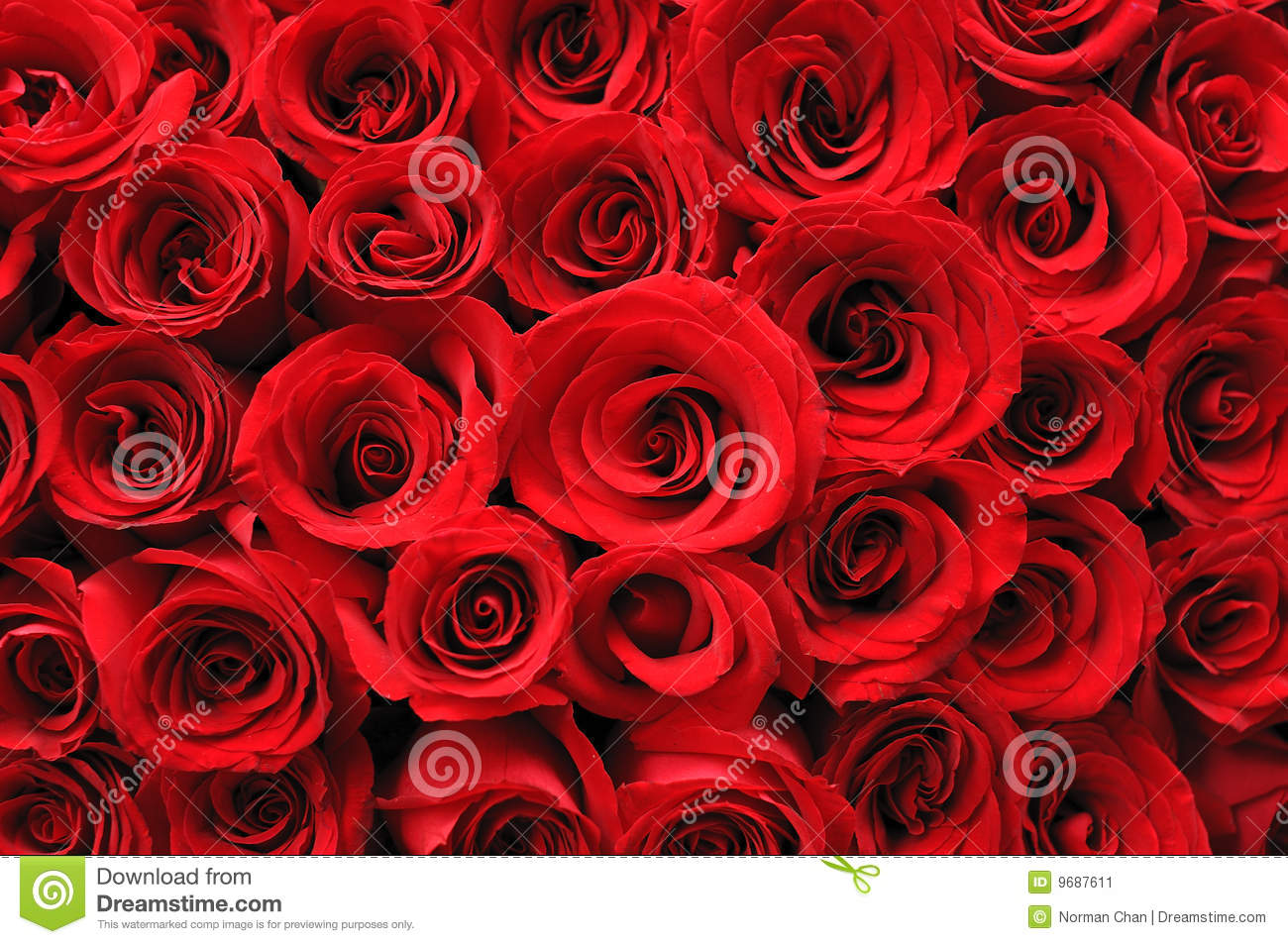Chanel Wallpaper For Iphone 5 Red Roses Background Stock Image Image Of Blossom