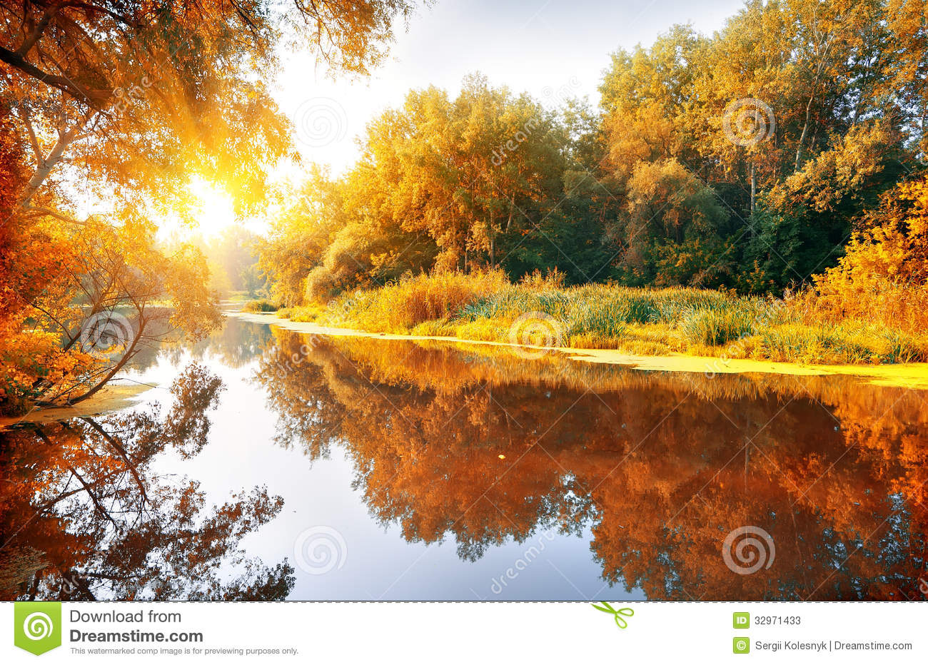 Horses In The Fall Wallpaper River In A Delightful Autumn Forest Stock Photos Image