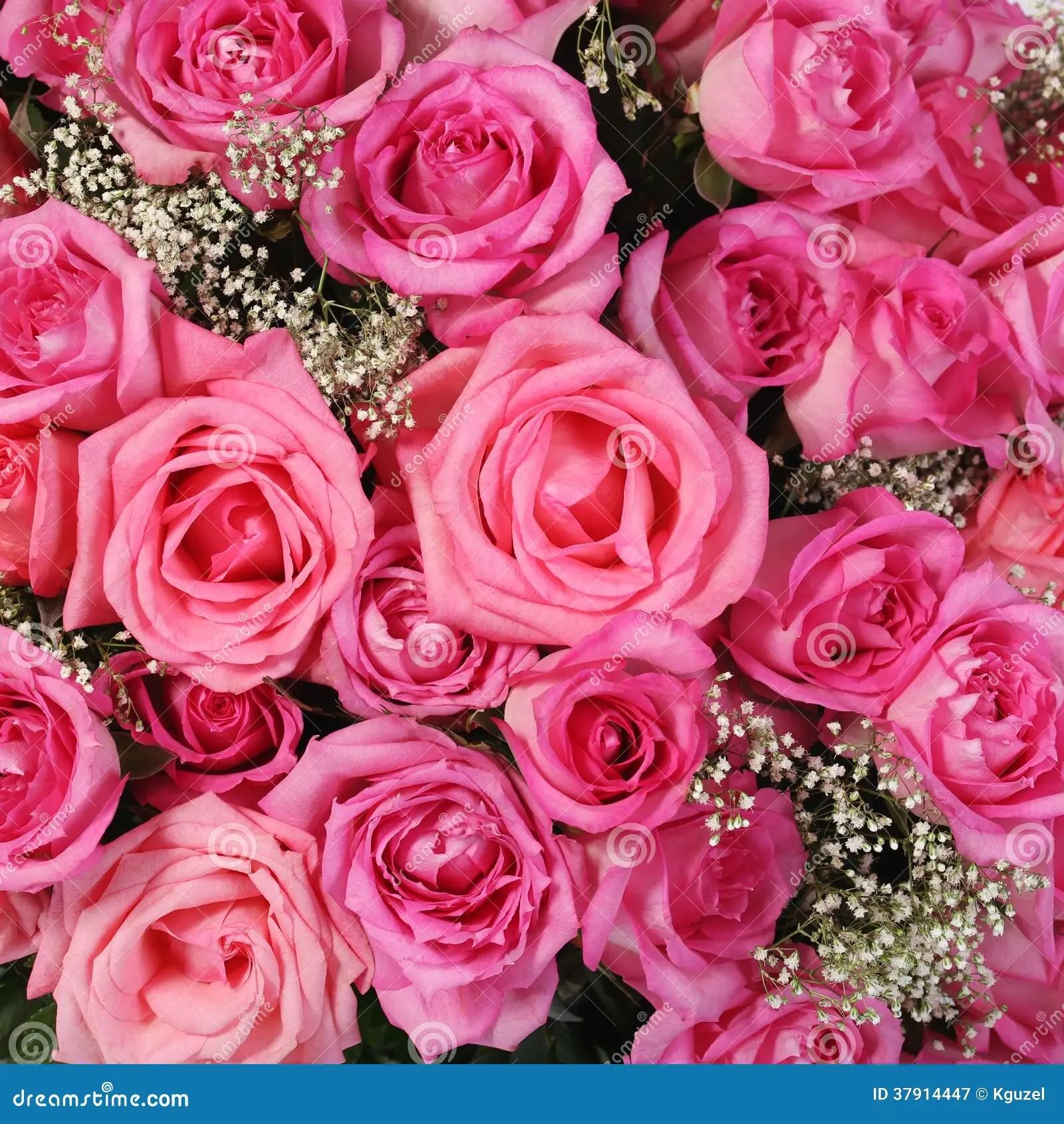 Bridal Wallpaper Hd Rosa Rosor Bakgrund Royaltyfri Fotografi Bild 37914447