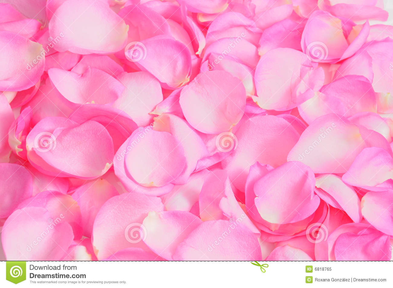 Falling Rose Petals Wallpaper Rose Petals Background Stock Image Image Of Texture