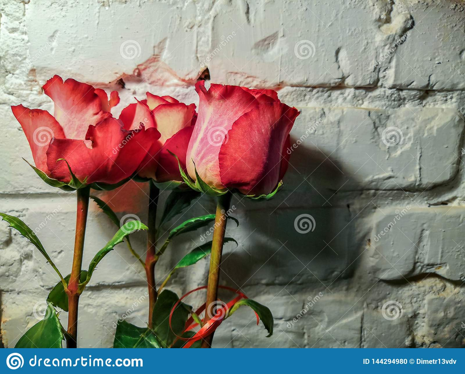 Commode Rose Roses Against A White Brick Wall Stock Photo Image Of Indoor