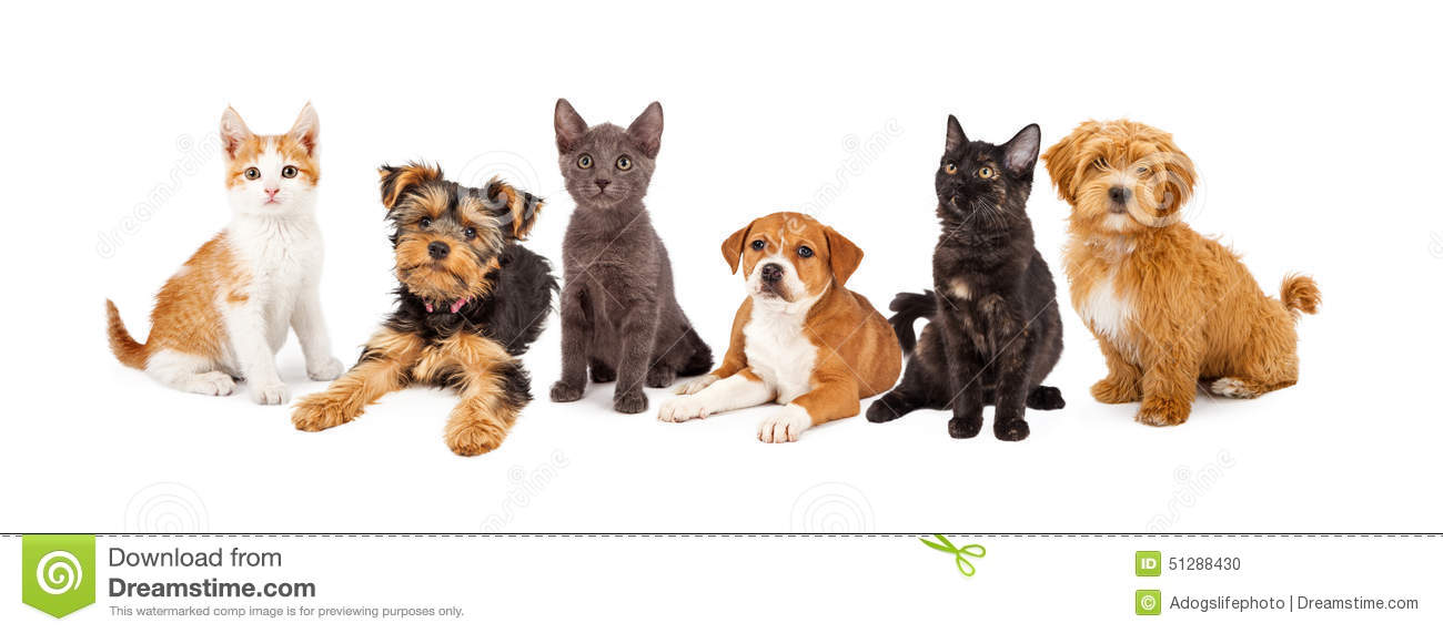 Cat Cute Wallpaper Download Row Of Puppies And Kittens Stock Photo Image 51288430