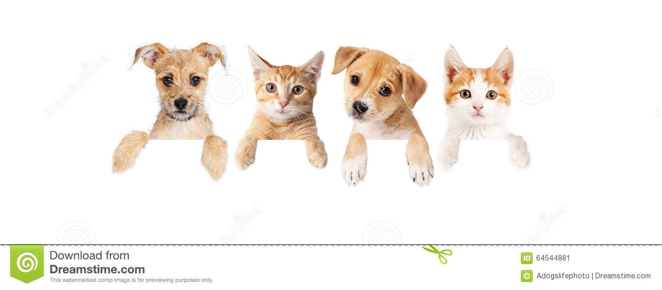 Cute Baby Hedgehog Wallpaper Row Of Puppies And Kittens Over Blank Banner Stock Photo