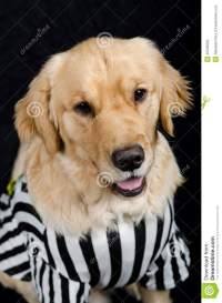 Rufferee