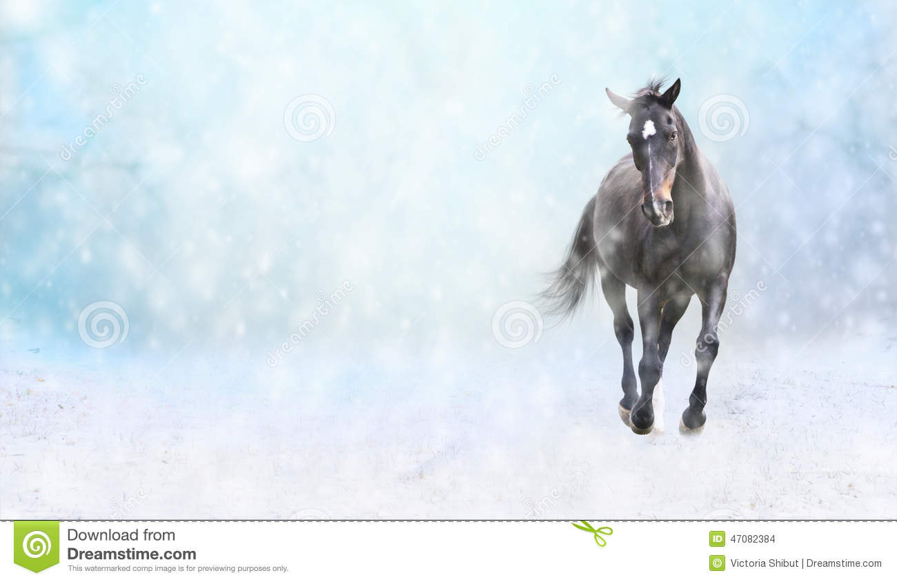 Beautiful Wallpapers 3d Animation Running Black Horse In Snow Winter Banner Stock Photo
