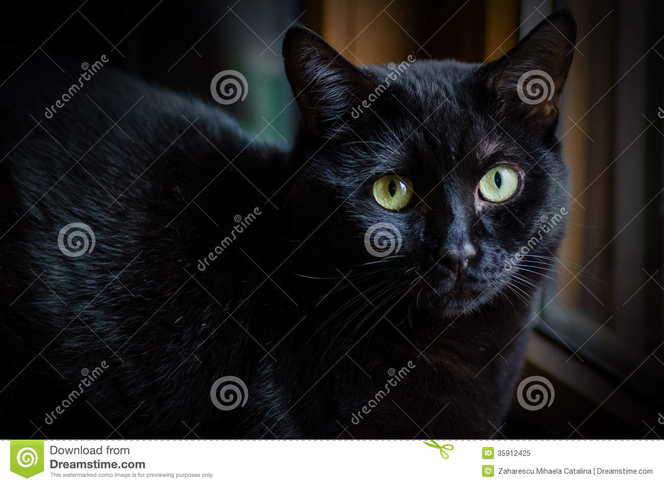 Cute Baby Blue Eyes Wallpaper Sad Black Cat Stock Image Image Of Home Domestica Nose