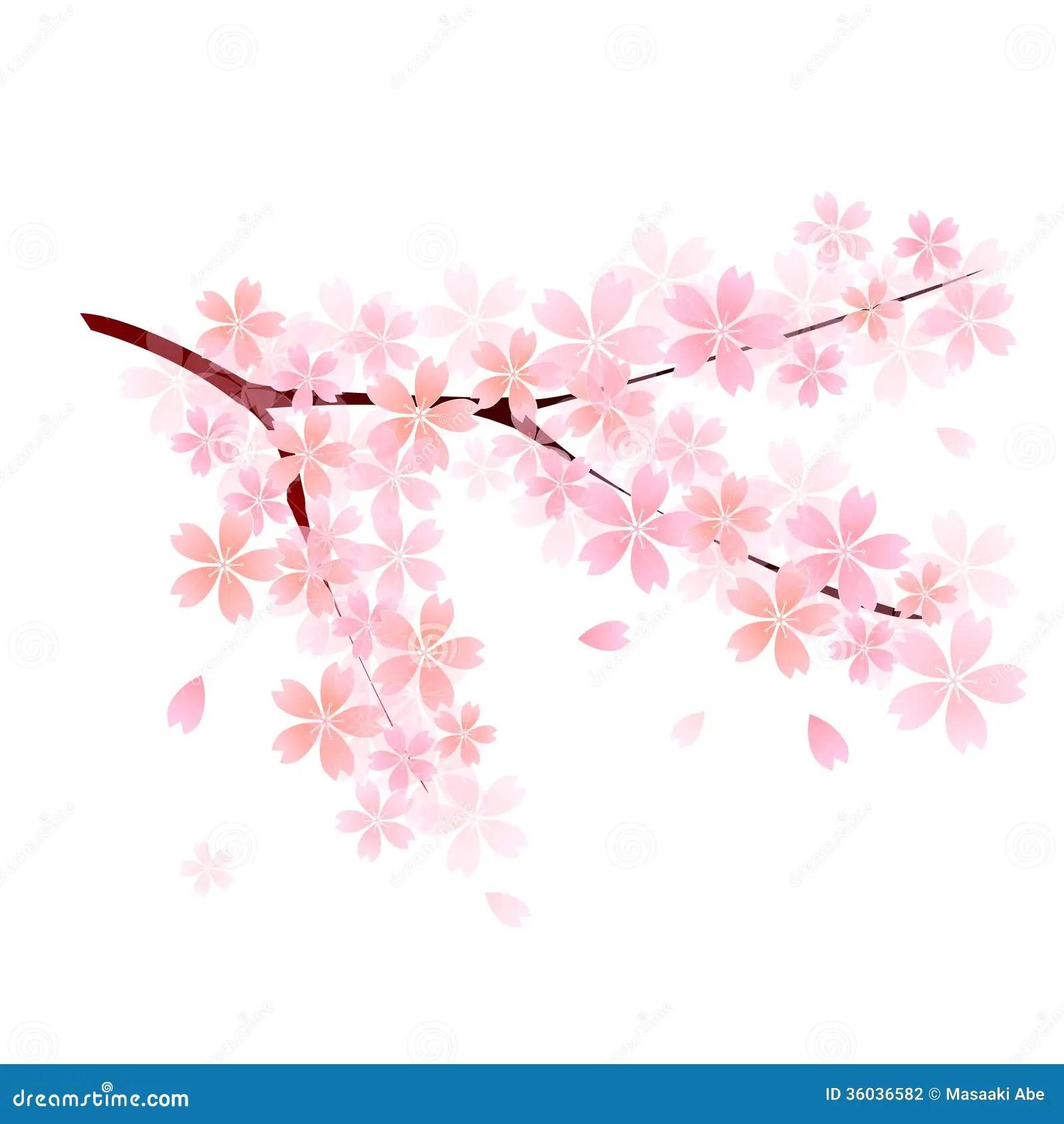 Falling Rose Petals Wallpaper Sakura Sakura Spring Stock Vector Illustration Of Flower